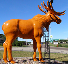 Large life size moose sculpture